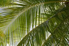 Free Palm Tree Leaves Stock Images - 20908284