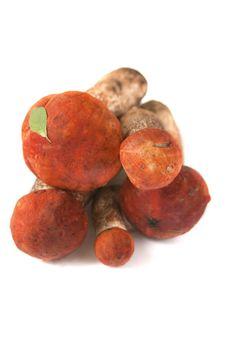 Free Orange-cap Boletuses Royalty Free Stock Photo - 20908895