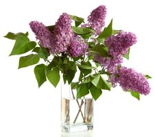 Free Bouquet Of Spring Purple Lilac Royalty Free Stock Images - 20909669