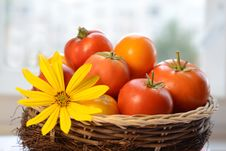 Free Tomatoes Royalty Free Stock Image - 20909676