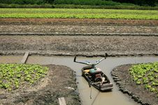 Free Boat On The Ditch In Lettuce Farm Royalty Free Stock Photos - 20909868