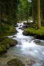 Free Falls In Wood, The Mountain River Stock Image - 20918871