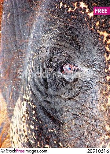 Free Elephant Eye Royalty Free Stock Image - 20910516