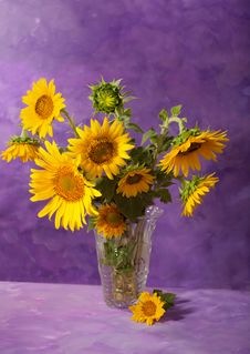 Free Sunflowers Stock Images - 20910394