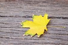 Free Maple Leaf Royalty Free Stock Photo - 20910435