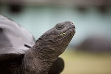 Free Close Up Of A Turtle S Snout Royalty Free Stock Photos - 20910968