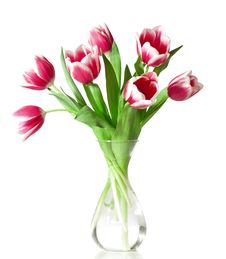 Pink And White Tulips Royalty Free Stock Photos