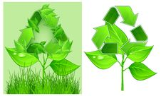 Free Recycle Sign On Plant Royalty Free Stock Photo - 20911845