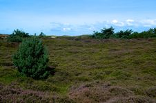 Free Moorland Herb Stock Photography - 20911962