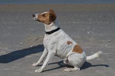 Free Dog At The Beach Stock Photo - 20912010