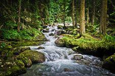 Free Magic Wood & Mountain River Royalty Free Stock Photo - 20913865
