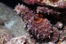 Free Hawaiian Day Octopus Royalty Free Stock Image - 20913946