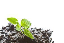 Free Little Green Seedlings Stock Images - 20914804