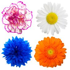 Free Flowers Royalty Free Stock Image - 20915186