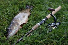 Free Fish And Fishing Rod On The Grass Stock Image - 20916561
