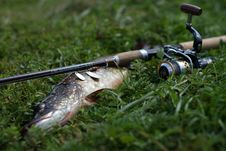 Free Fish And Fishing Rod On The Grass Stock Images - 20916574