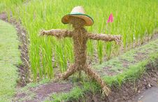 Free Thai Scarecrow Royalty Free Stock Photography - 20918427