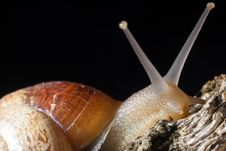 Free Just A Slowly Snail Royalty Free Stock Photography - 20918667