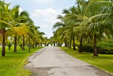 Free Road In Tropical Garden Royalty Free Stock Image - 20919726