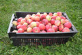 Free Apples In A Black Box Stock Image - 20922691