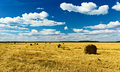 Free Yellow Field Stock Photo - 20929210