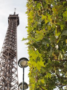Eiffel Tower And Tree Stock Photography