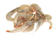 Free Frozen Prawns Stock Photography - 20920592
