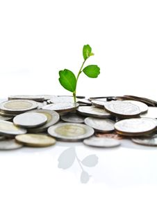 Green Plant On Coins Stock Photos