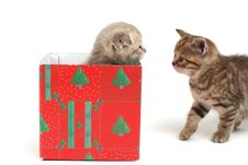 Free Cat In Gift Box Stock Photography - 20923592