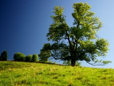 Free Tree Stock Photography - 20923892