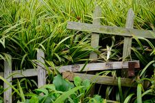 Free Fence And Grass Stock Image - 20924141