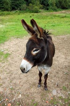 Free Brown Donkey Royalty Free Stock Photo - 20924205