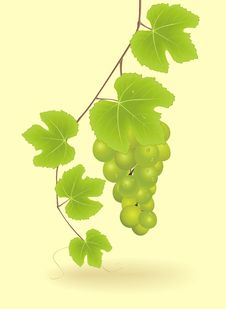 Free Bunch Of Grapes Stock Photos - 20924553