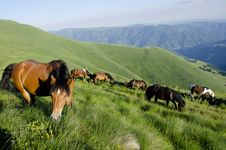 Free Wild Horses Stock Photography - 20925052