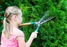 Free Girl Cuts Bush With Scissors Royalty Free Stock Image - 20925106