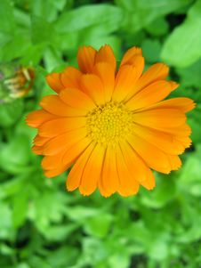 Free Orange Flower Stock Photography - 20925362