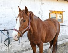 Free A Portrait Of A Horse Royalty Free Stock Photography - 20928397