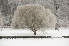 Free Tree After Ice Rain Stock Images - 20929004