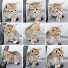 Free A Small Kitten Stock Image - 20929131