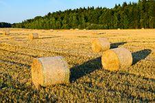 Free Autumn Field Stock Photos - 20929713