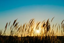 Free Grass On The Field Royalty Free Stock Photography - 20929727