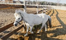 Free White Horse Royalty Free Stock Image - 20929746