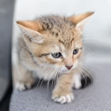 Free A Small Kitten Stock Images - 20929764