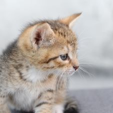Free A Small Kitten Royalty Free Stock Image - 20929766