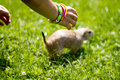 Free Boy And Prairie Dog Stock Images - 20931244
