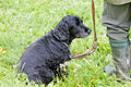 Free Hunting Dog Stock Photos - 20933583