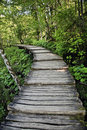 Free Wooden Decked Path In Forest Royalty Free Stock Images - 20934709