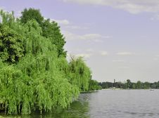 Free Lake With Willow Royalty Free Stock Image - 20930786