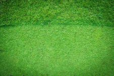 Free Real Green Grass Background Royalty Free Stock Photography - 20931137