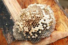 Free Honeycomb Royalty Free Stock Image - 20931356